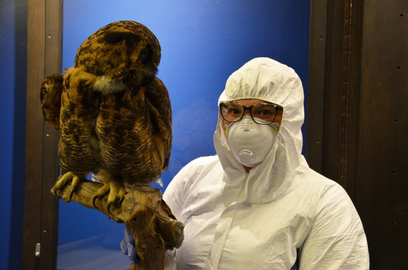 Kelly Bishop, a senior in the Antoinette Westphal College of Media Arts & Design who completed a co-op with The Drexel Collection, donned protective gear to work with taxidermy birds preserved with arsenic for a 2016 exhibit.