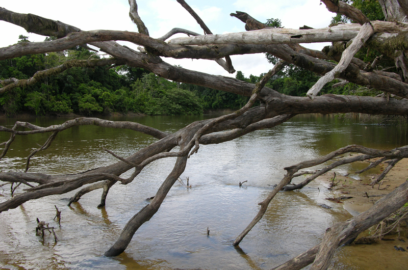 A fallen tree sticking into a river.