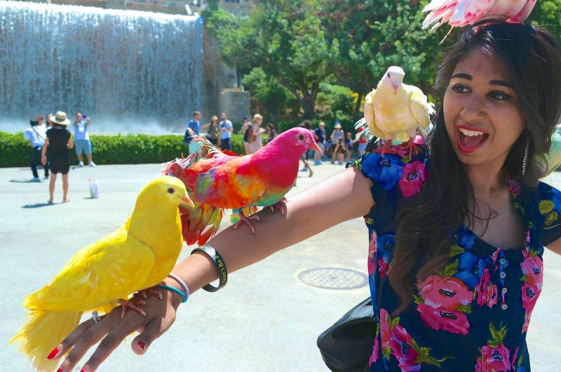 "A submission to the Drexel Study Abroad photo contest from Rizwana Saleem in Spain with the caption ""Birds and Barcelona are my two favorite things!"""