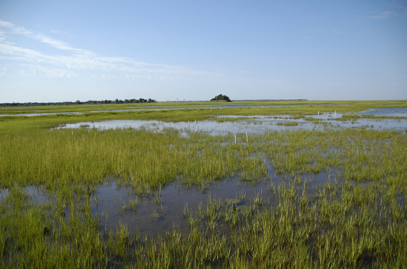 A wide view of a Barnegat Bay salt marsh