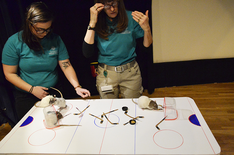 The complex sport of rat hockey was on display for all to see at the Academy of Natural Sciences.