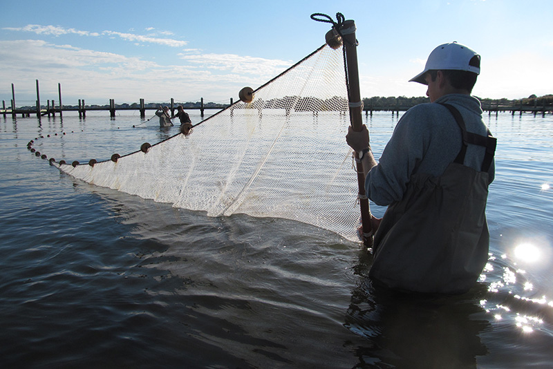 BEES students seining for fish in Barnegat Bay, New Jersey. Photo credit: Richard J. Horwitz.
