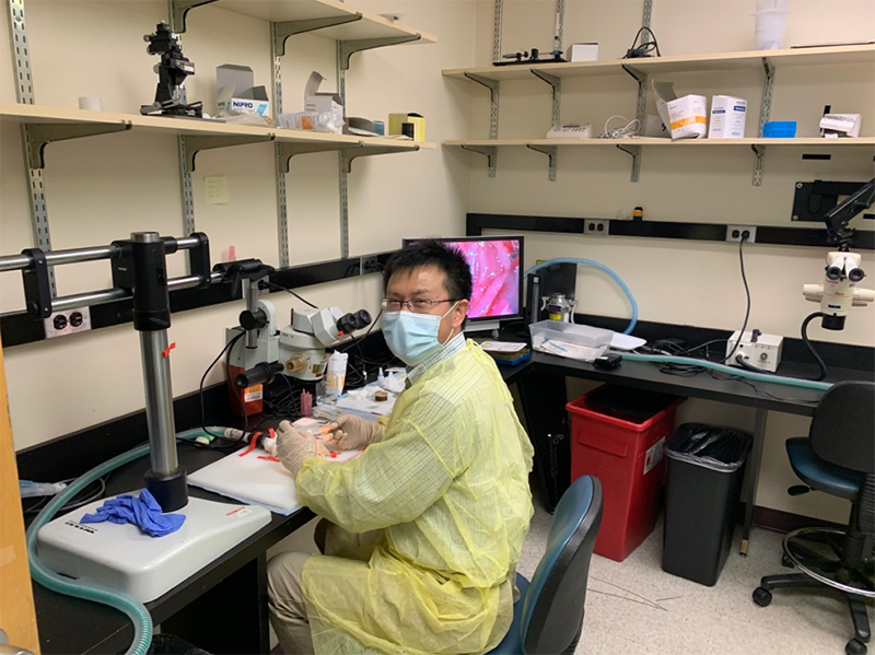 Assistant Professor Shaoping Hou, PhD, using the surgical microscope at the Spinal Cord Research Center. Photo courtesy Itzhak Fischer, PhD.