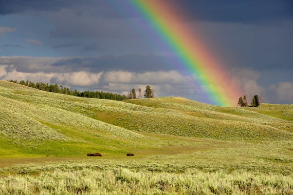 Image of a rainbow over a green field