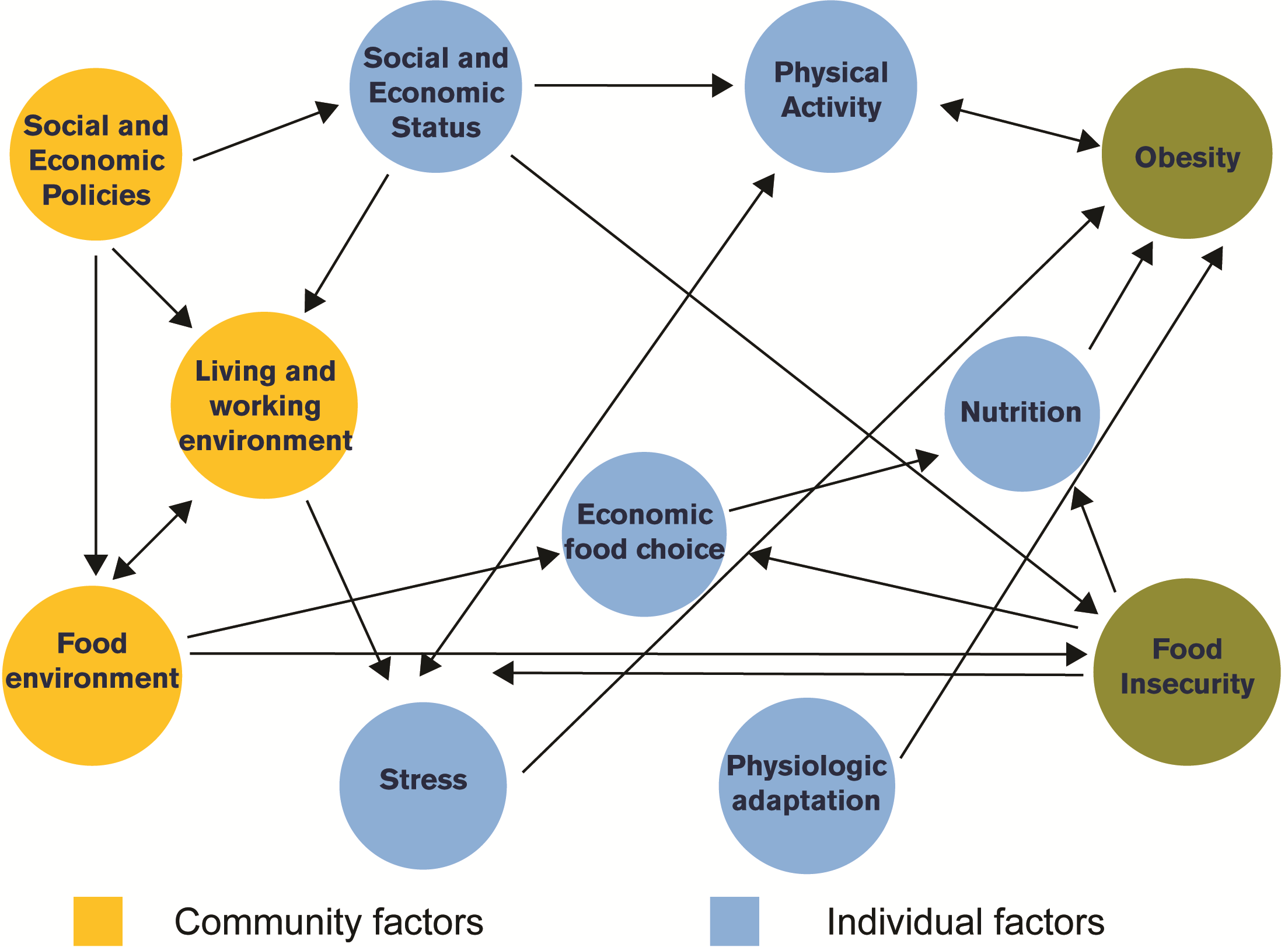 Patterns Of Obesity And Cutting Meals In Philadelphia Drexel Urban Health Collaborative Drexel University